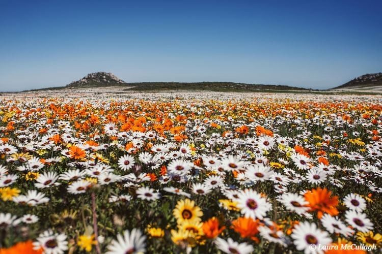 Top 10 things to do in Spring - Cape Town