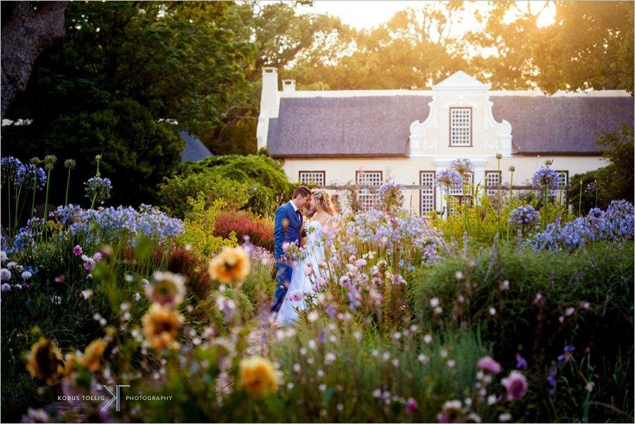 Best Wine Farms to Visit in the Cape